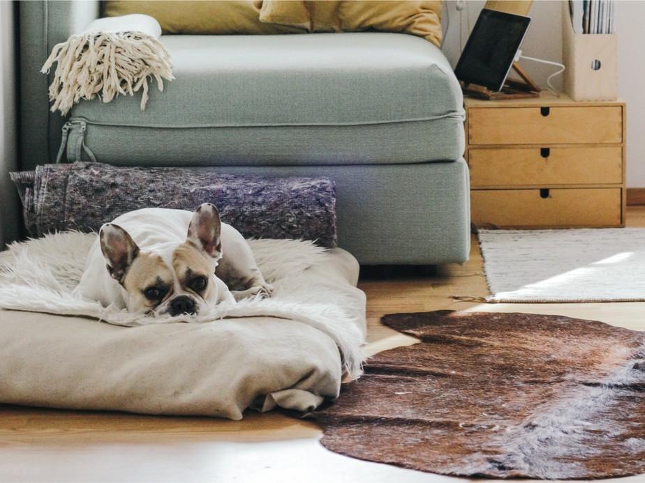 4 dicas de como compor o espaço pet para apartamento